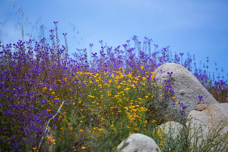 Spring Flowers B-40.jpg
