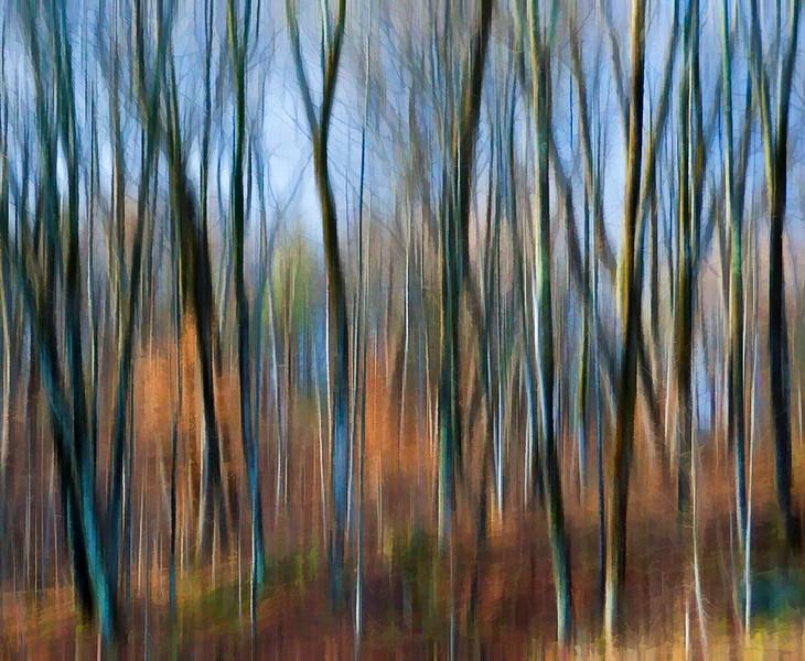 Autumn Forest Blur.jpg