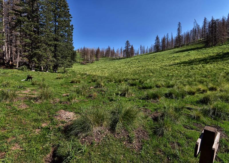 NEA_0353-7x5-Trail T25.jpg