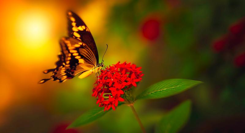 Butterfly-001.jpg