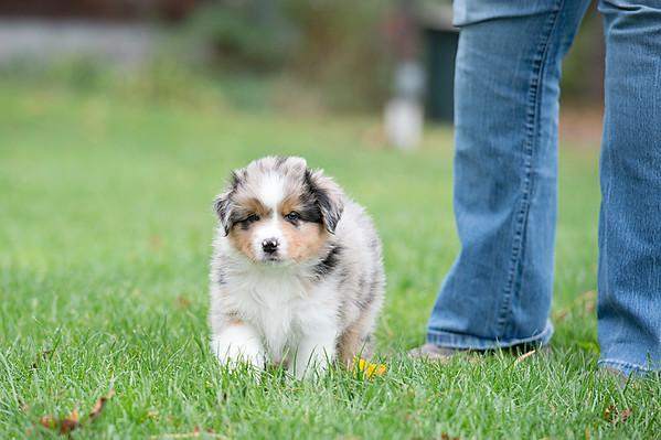 Puppies 10-13-17