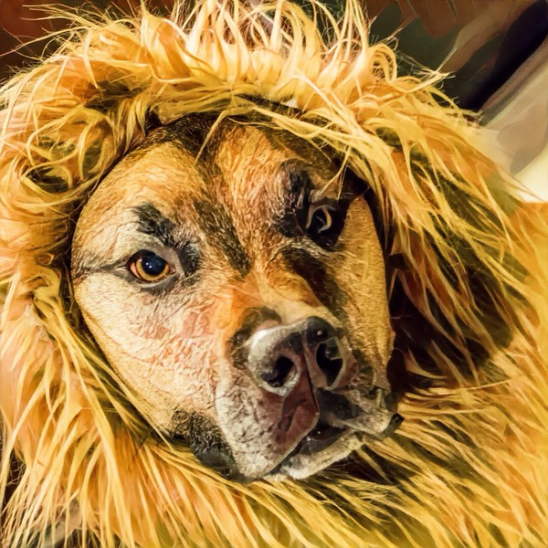 Lions Mane, Max