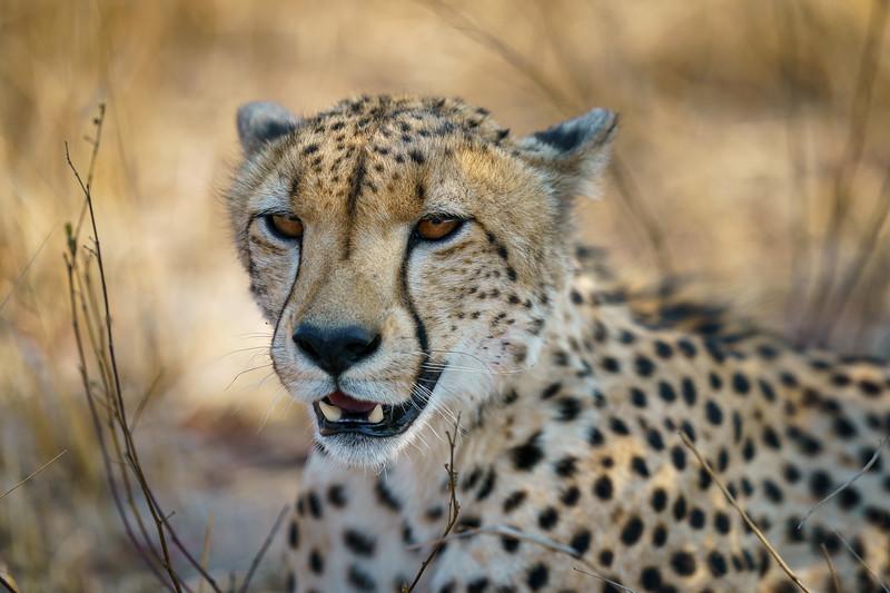 LeopardHills-20191028-0675.jpg