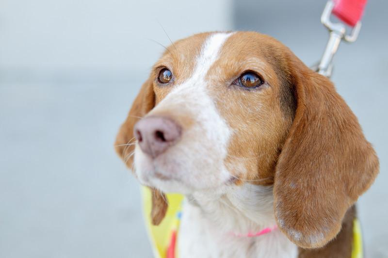20110312 PetSmart Adoption Event-59.jpg