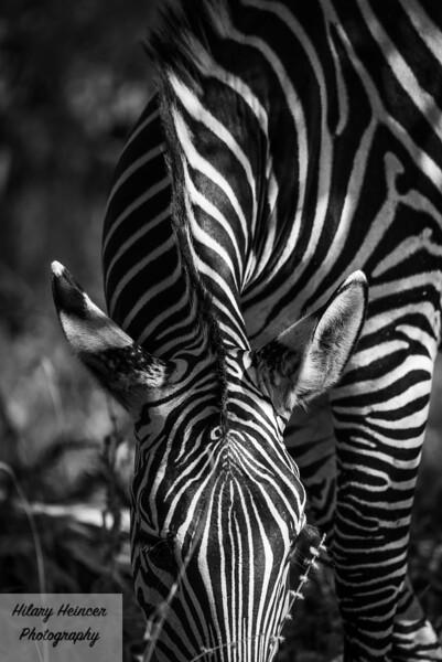 Kenya Wildlife-9.jpg