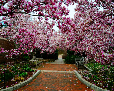 Washington DC Blossoms