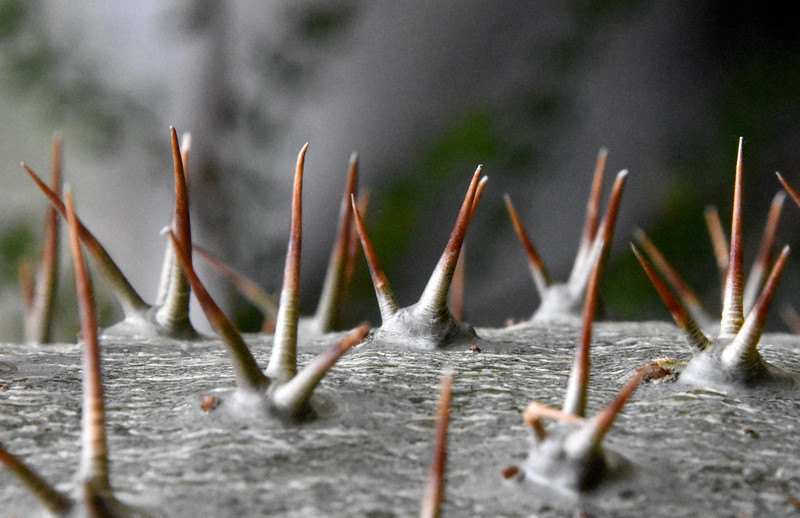 Madagascar-Thorns.jpg