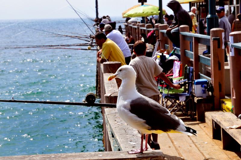 Redondo Beach Pier-4.jpg