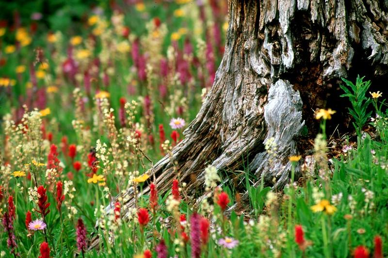 amh FLOWERS (1291).jpg