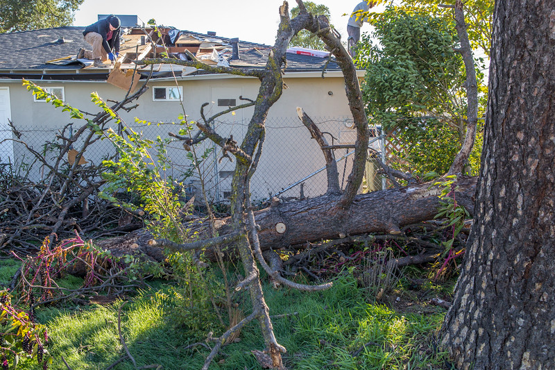 5671 Wallace Ave - Tree 1030am 12 16 2017 Extremly Windy Conditions-116.jpg