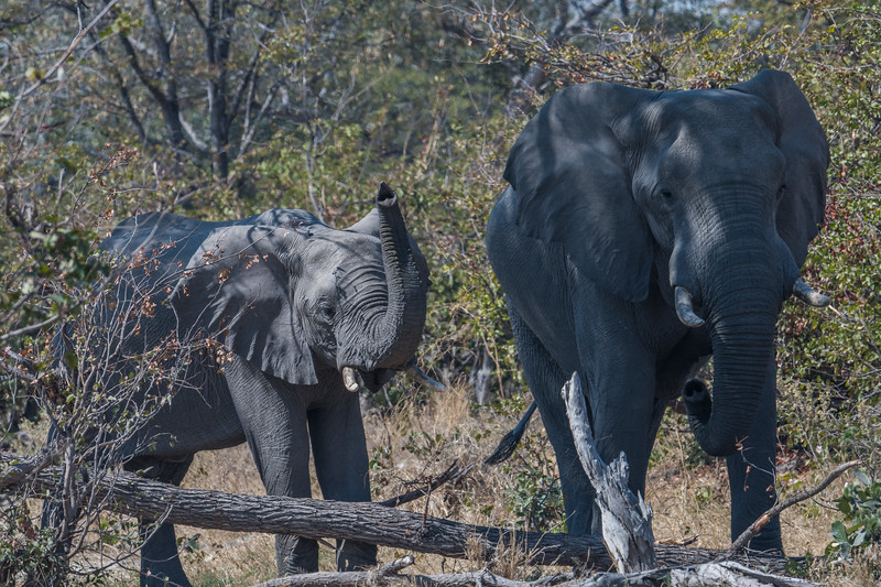 Botswana_June_2017 (1882 of 6179).jpg
