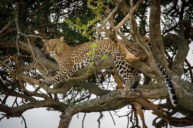Kenya_PSokol_0619-2178.jpg