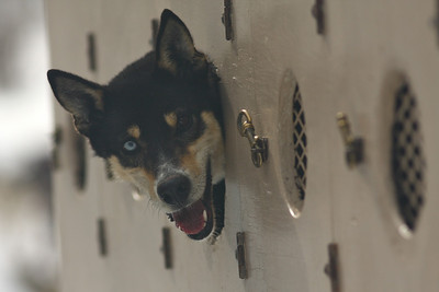 Telluride Dogsledding<br>February, 2010