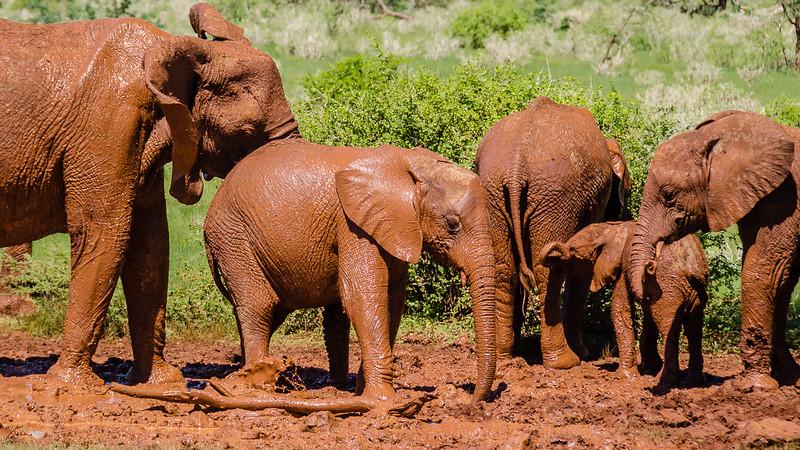 Elephants-0211.jpg