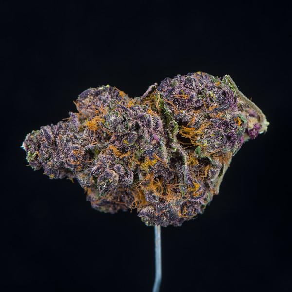 Tropicana Cookies - Redbud Roots1.jpg