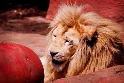 Capron Zoo