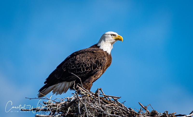 Bald Eagle Causeway 3 121120-.jpg