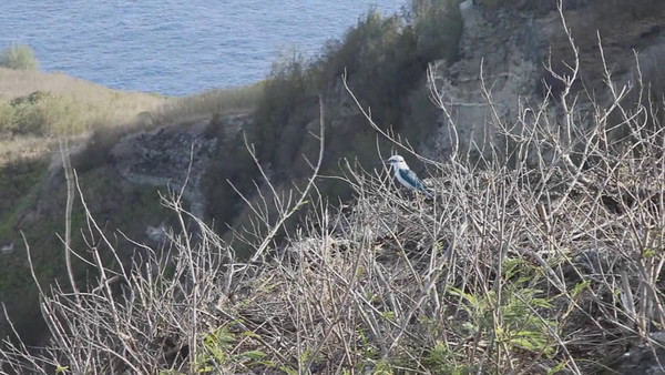 MAY 7, 2010:  FORBIDDEN ISLAND LOOKOUT