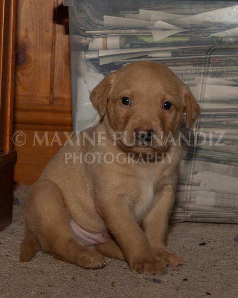 Weika Puppies 2 Mar 2019-8476.jpg
