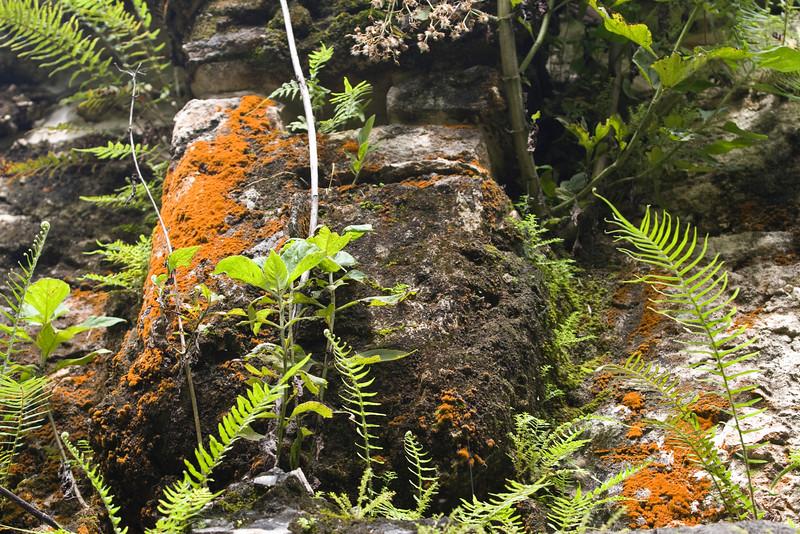 - Ce site de Ruines Mayas, se trouvent dans la forêt tropicale Lacandone et est toujours préservé par les Indiens Lacandons. Ils défendent leur droit de laisser en état, aussi bien ce site sacré que leur forêt.  - Este lugar de Ruinas Mayas se encuentran en el bosque tropical Lacandone y siempre se preserva por los Indios Lacandons. Defienden su derecho a dejarlo en estado, tanto este lugar consagrado como su bosque. - This site of Mayas Ruins are in the tropical forest Lacandone and it is always preserved by the Lacandons Indians. They defend their right to leave it in state, as well this crowned site as their forest. - Dieser Ruinstandort Mayas befinden sich im tropischen Wald Lacandone, und er wird immer von den Indern bewahrt Lacandons. Sie verteidigen ihr Recht, es in Stand zu lassen, sowohl dieser gekrönte Standort als auch ihr Wald.