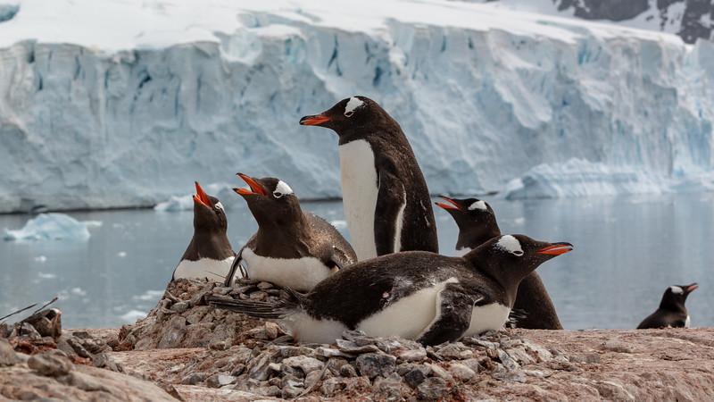 2019_01_Antarktis_03194.jpg