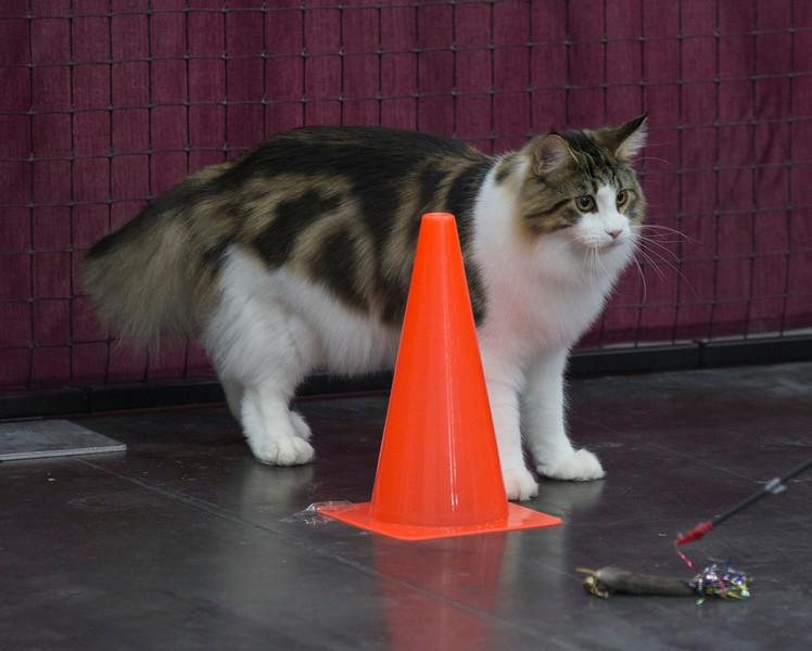 CatShow2014208.jpg