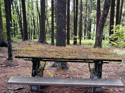 Mossy picnic table Balsam Mtn Road  GSMNP NC  6/17/07