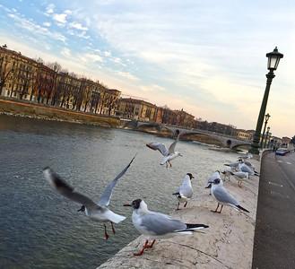 Verona (misto iPhone)