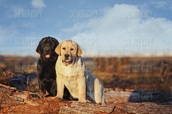 Sissy&Hunter03b