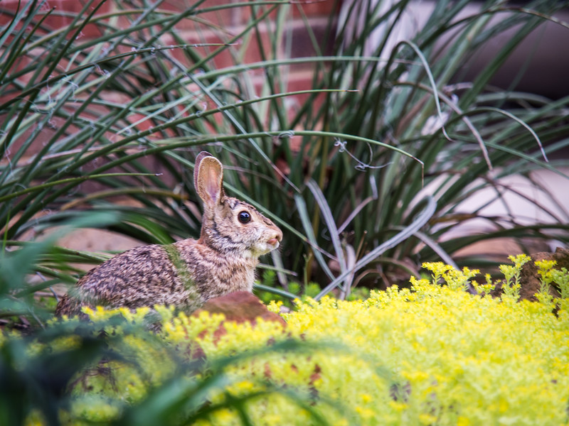 Bunnies and Lizards-4290612.jpg