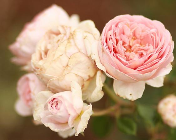 {pistils & petals}