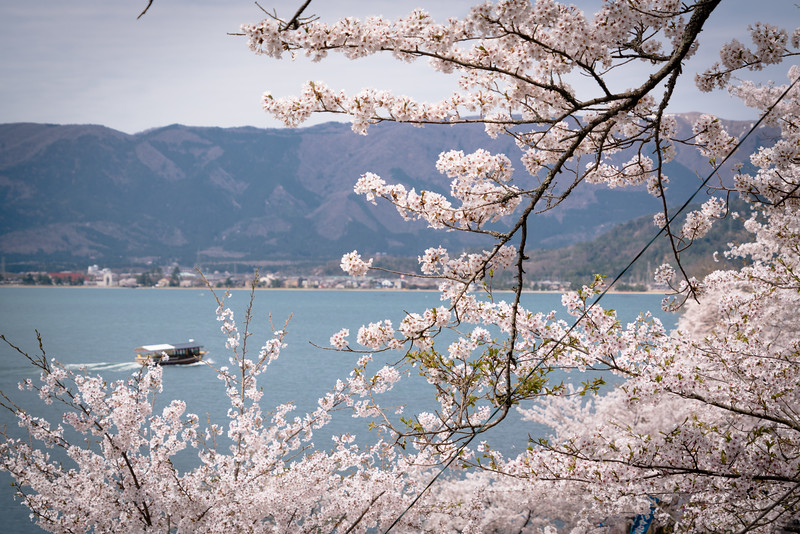 Cherry Blossoms on Lake Biwa