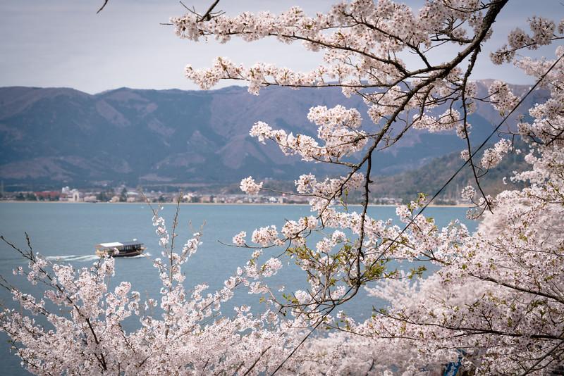 Cherry Blossoms on Lake Biwa