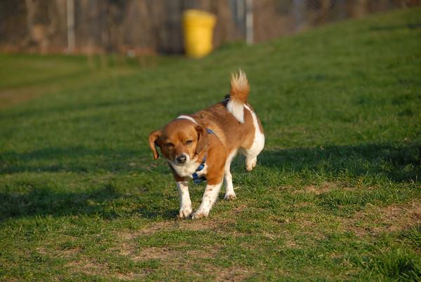 2010-04-05 Denville Dog Park at Dusk