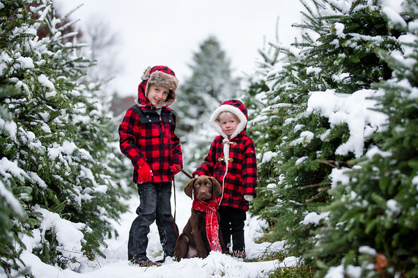 Burts Tree Farm