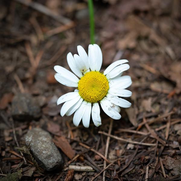 July Flowers II