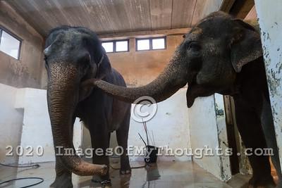 20190811 World Elephant Day