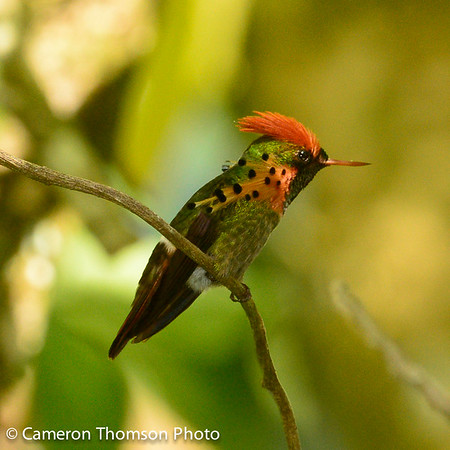 Trinidad Birds