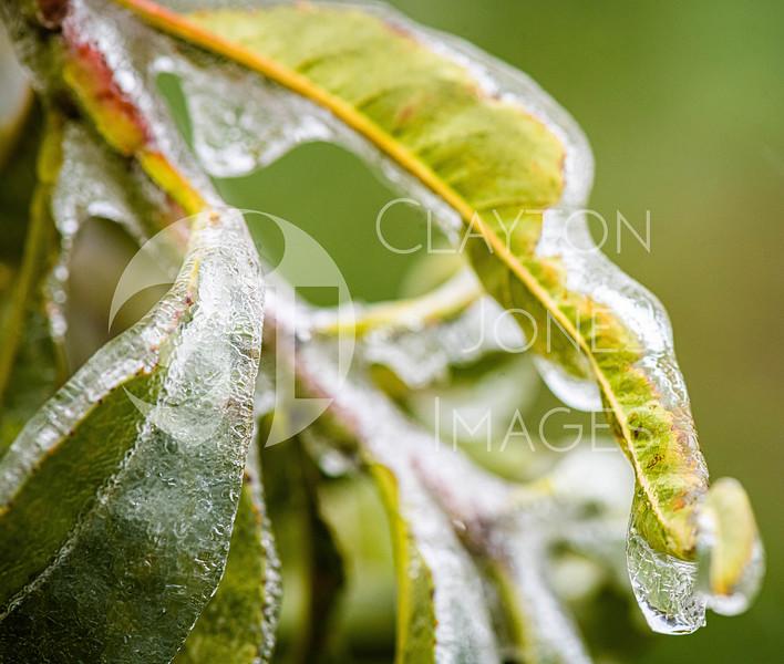 icy_rain_10.27.2020-10.jpg