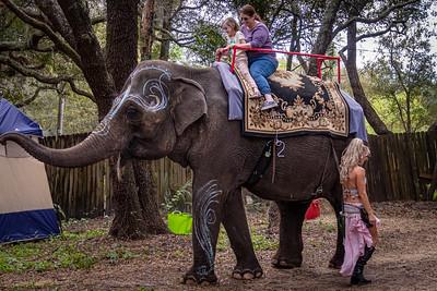 Festival Elephant Rides