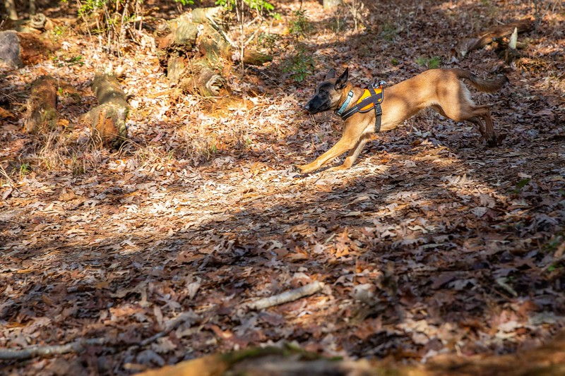 Stella 12-2019 Woods search training (136).jpg