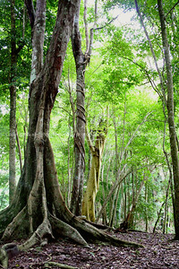 017-rain_forest-belize-05nov06-1405