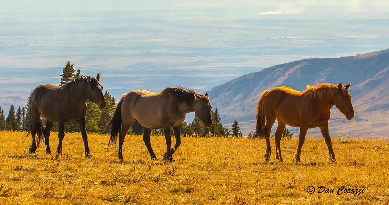 3 Mustangs-1a.jpg