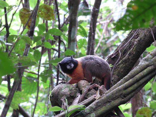 Randy's Amazonia pictures