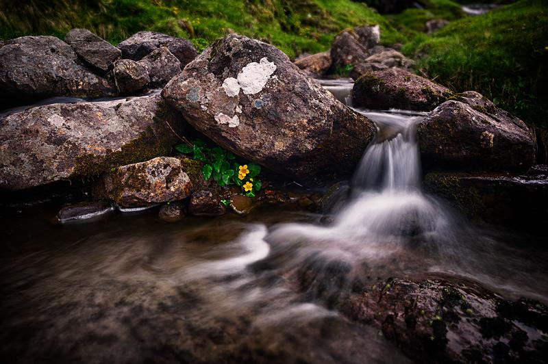 Yellow Water Flower