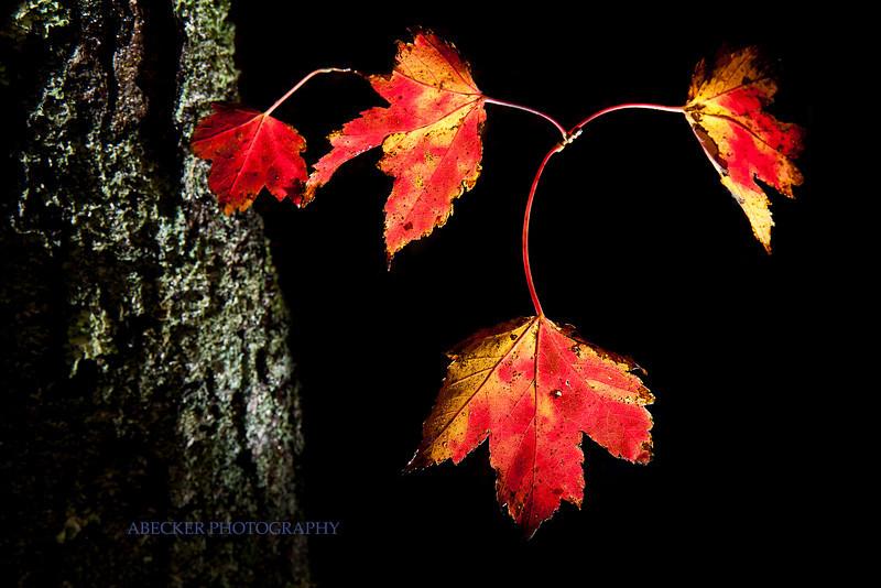 Leaves lit copy_1.jpg
