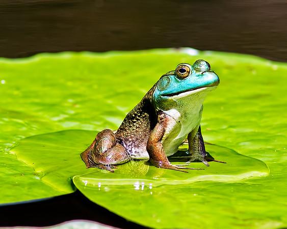 Small Wildlife