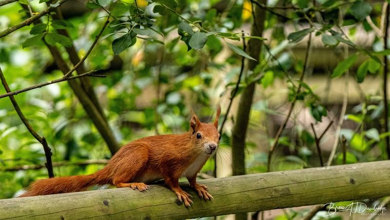 British Wildlife Centre_D850-0005.jpg