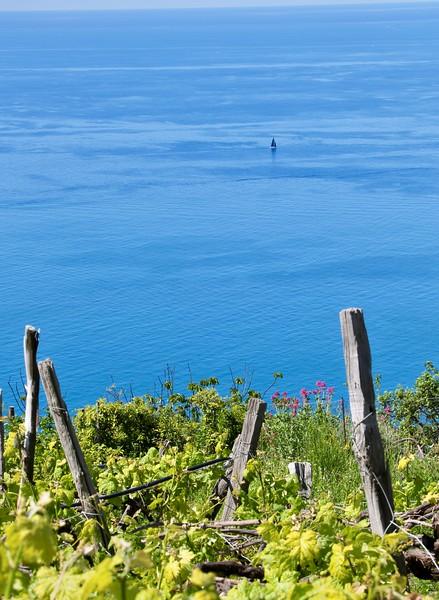 The hike from Volastra to Corniglia - Cinque Terre
