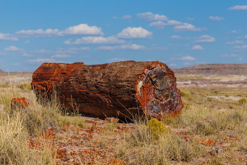 Petrified wood along the Giant Logs Trail